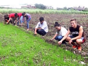 rice planting5